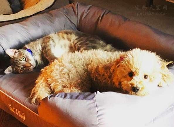两条腿的狗狗,遇到了一位有爱心的男人,命运再次发生转变