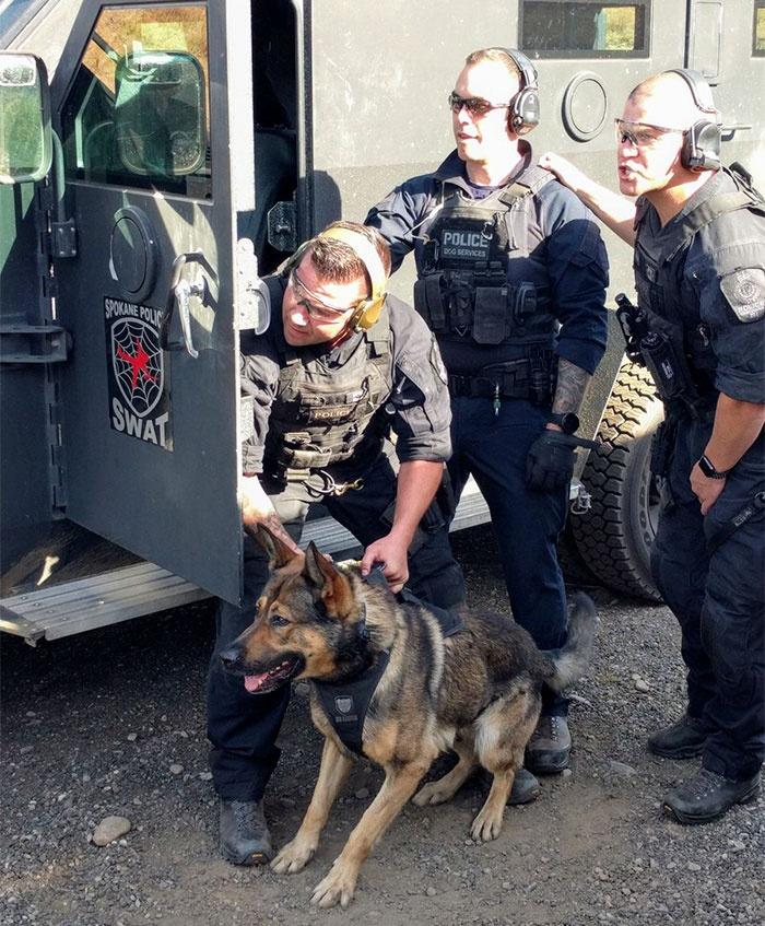 警犬的慈善活动,为日历拍照片,获得的收入捐给需要的人