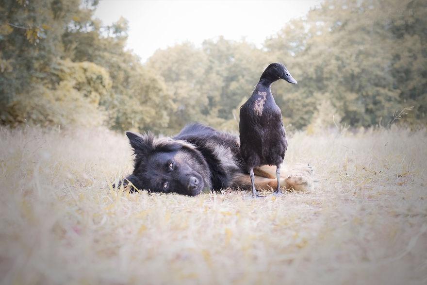 法国农场一位18岁小姑娘,用镜头记录一只狗狗和鸭子的日常
