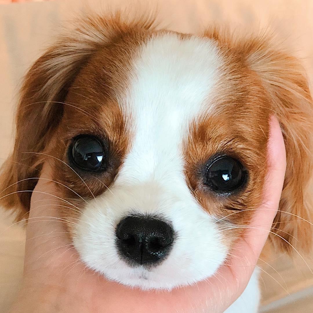 辟谣:被狗狗或者猫咪咬伤了,你必须去打狂犬病疫苗!