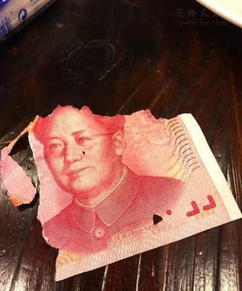 二哈在家直播撕钱,主人:我上辈子是不是欠你一百万?
