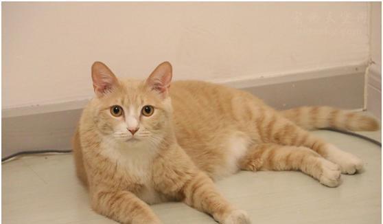 女子收养了一只流浪的橘猫, 猫咪到家的第一天, 干了件大事