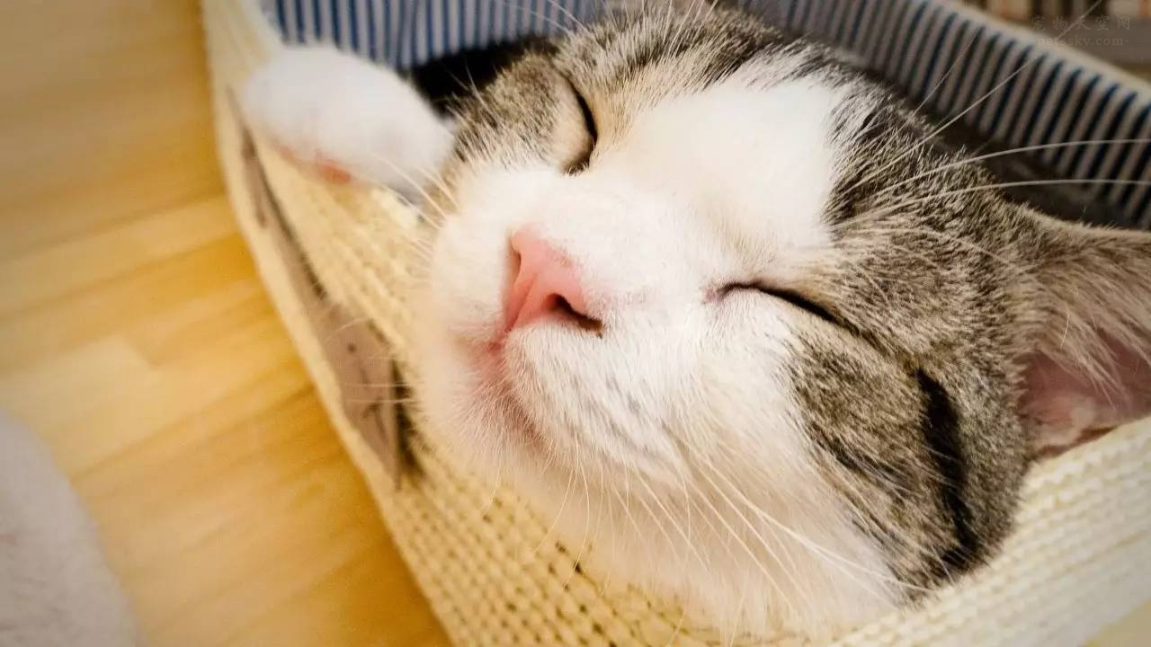 猫咪做绝育手术,必看的10条注意事项!