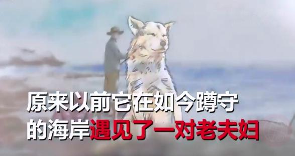 """内蒙古""""现实版忠犬八公"""",女主人被撞身亡,小狗原地守候80多天"""