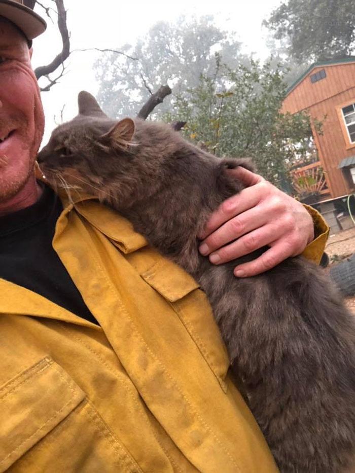 消防员从森林大火中救了一只猫咪,没想到收到它这样的感谢