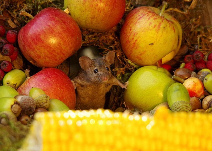 花园来了一窝老鼠,摄影师发现后,给它们拍了这些照片(20张)