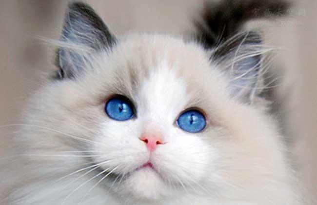过年期间,可以让猫咪独自在家吗?