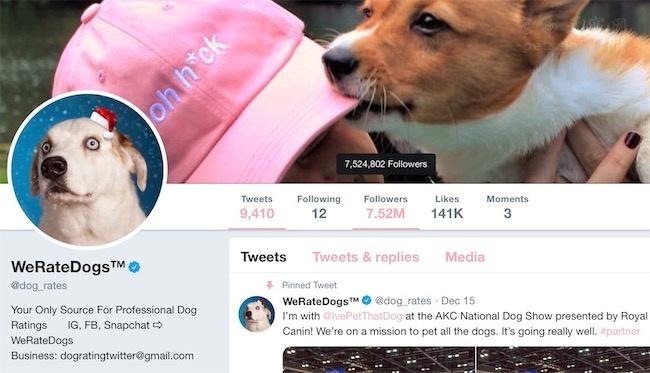 国外博主想到一个成为大V的主意,给网上的狗狗打评分(一)