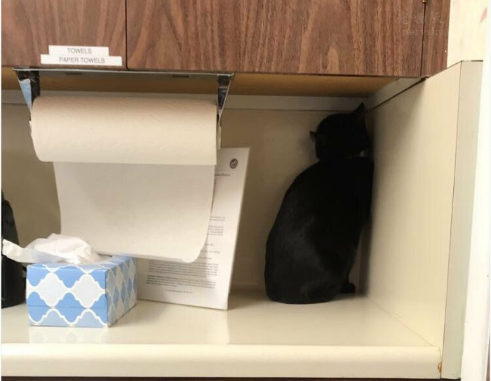 不喜欢医院的猫咪(16张)