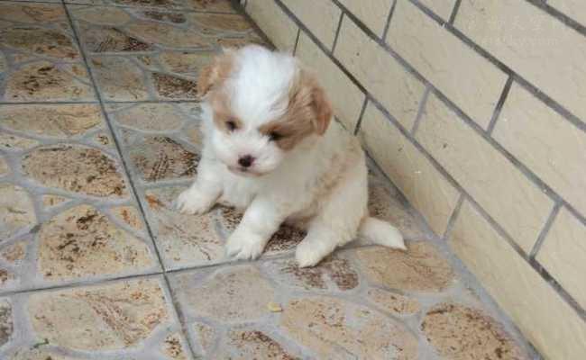 【南京领养】两只小狗,寻找愿意领养它们的人