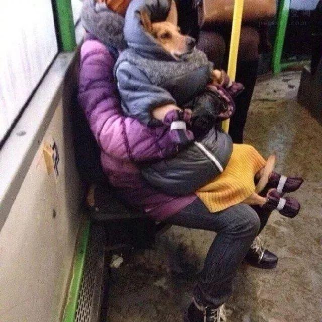 奶奶怕狗冷,给它穿了6件衣服,路都走不好了