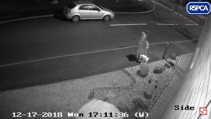 狗狗没有意识到自己被主人抛弃了,它一直在摇尾巴想进主人的车