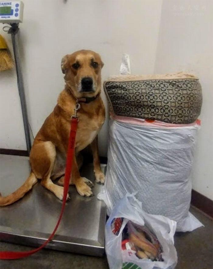 狗狗被自己的主人送进了救助站,还有它最喜欢的玩具和狗床