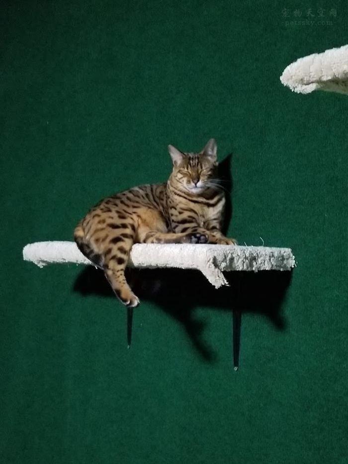 """哥哥花光了自己的积蓄,为弟弟的两只猫咪做了一个""""天堂"""""""