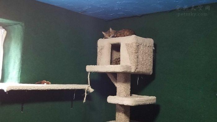 """哥哥为弟弟的两只猫咪,做了一个""""天堂"""""""