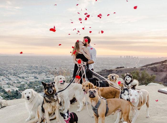 带着16只狗狗,向喜欢狗狗的女朋友求婚