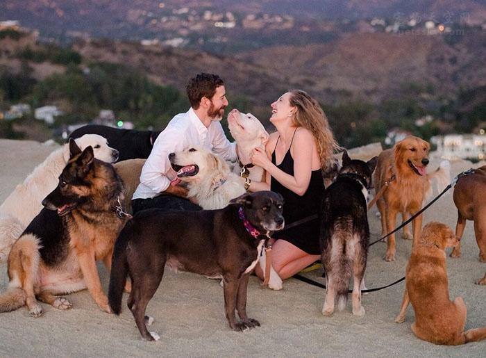国外男子的创意:带着16只狗狗,向钟爱狗狗的女朋友求婚