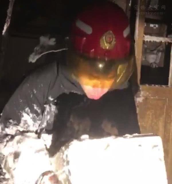 大连消防员救火后,清理现场时,又救了一只全身结冰的猫咪