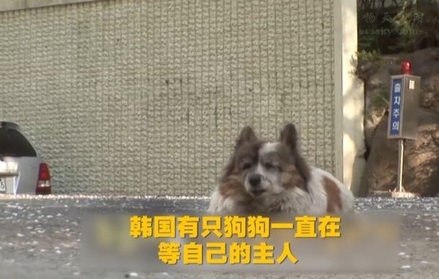 韩国一只狗狗原地等了主人10年,不肯离开,主人搬家时将它抛弃