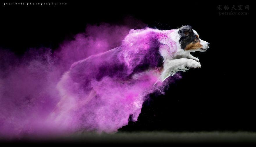 给狗狗拍摄照片的时候,还可以这么拍,拍出大片的特效(13张)