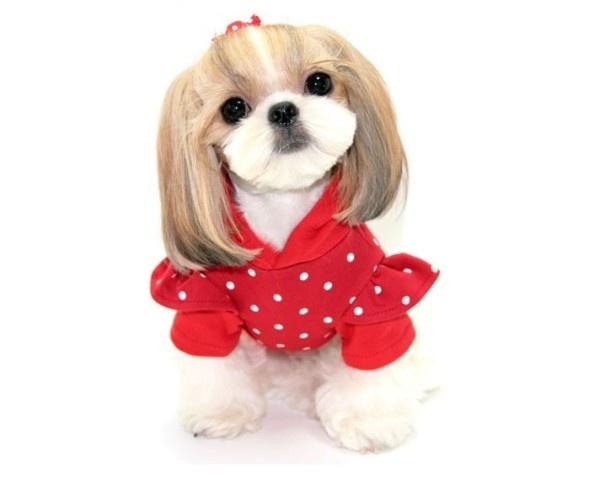 狗狗穿新装,贺新春,祝大家在新的一年里:旺旺旺!