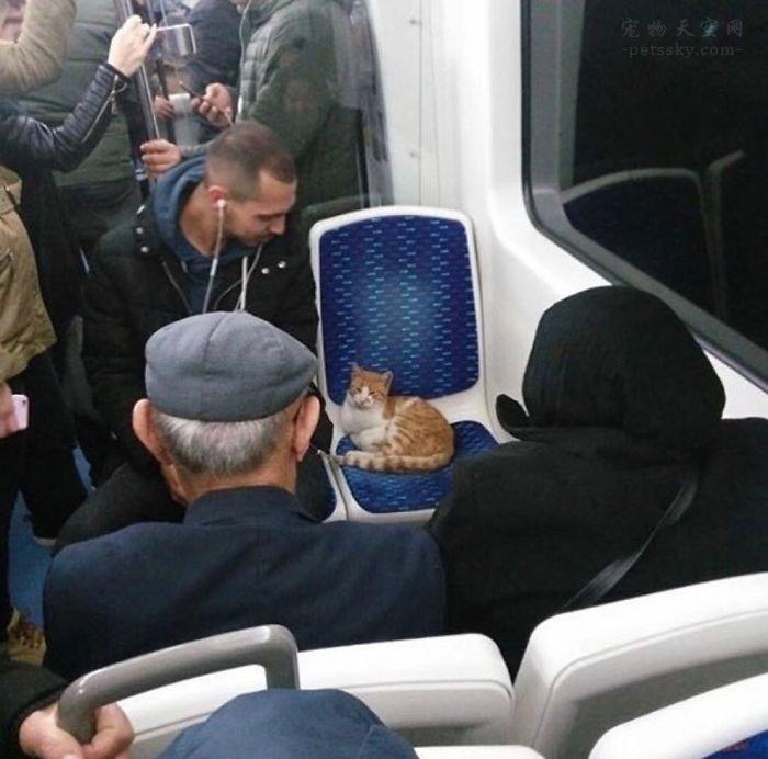 不养猫的人,可能很难理解养猫的乐趣所在(23张)