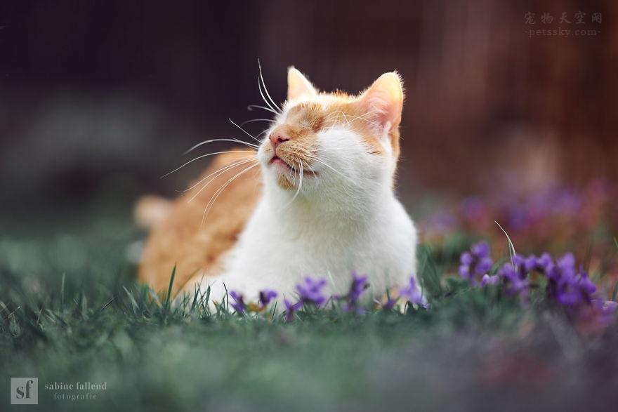这只猫咪叫Kazou,它在很小的时候失去了自己的眼睛