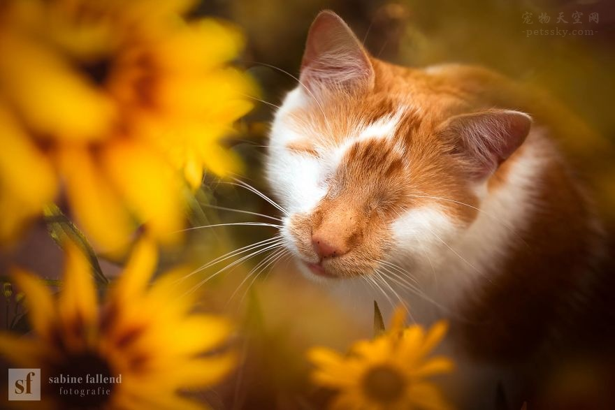 一只没有眼睛的猫咪,它在非常努力而勇敢地生活(12张)