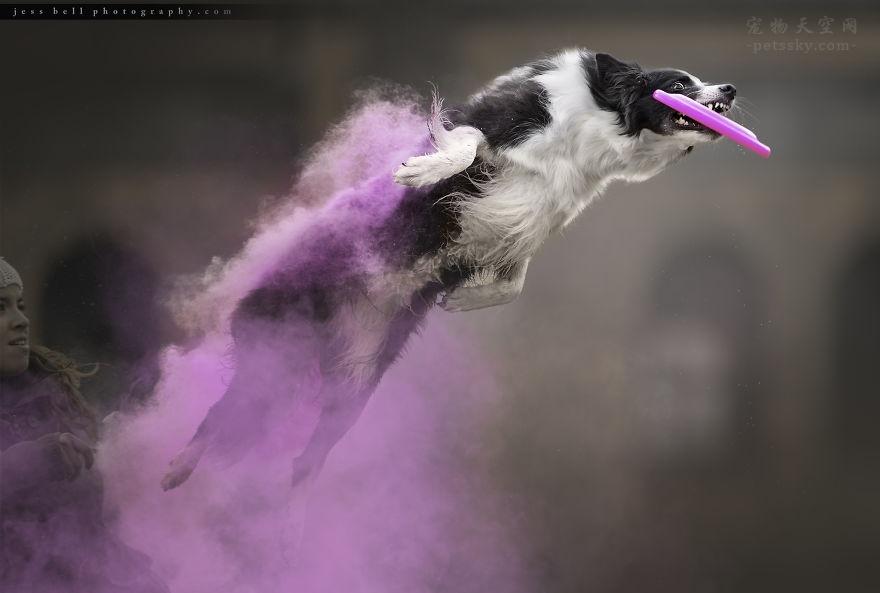 为奔跑的狗狗,拍出大片的特效(13张)