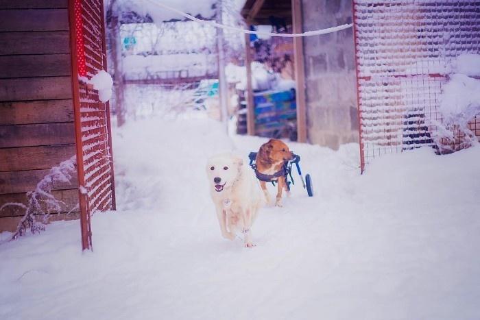 夫妻两人放弃了市中心的工作,在偏远地区租房救助流浪狗(三)
