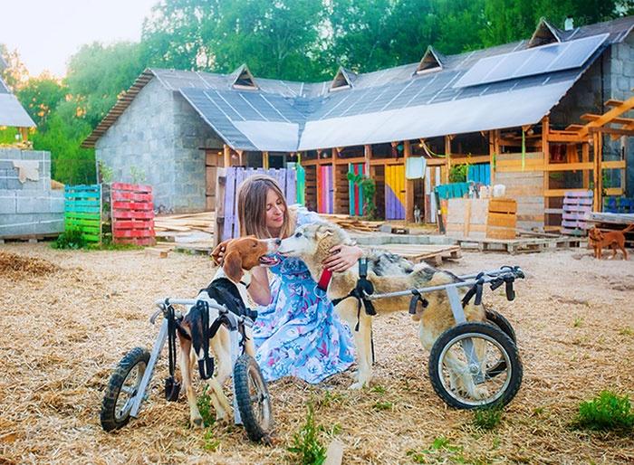 放弃了很不错的事业,俄罗斯姑娘决定照顾100多条流浪狗(一)