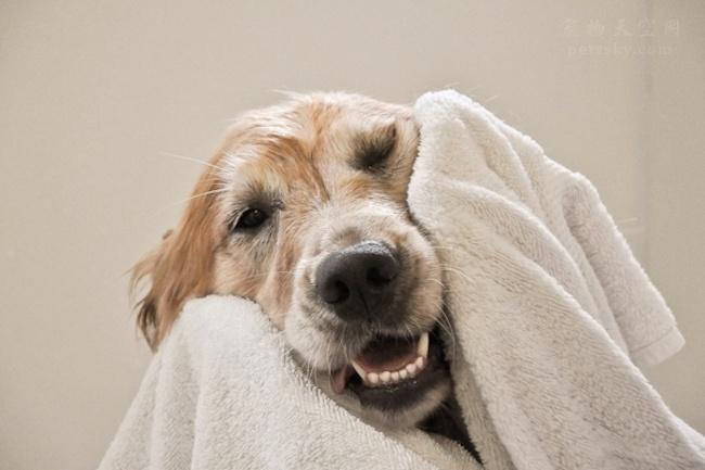 为什么宠物不能用人的香波,而需要使用它们专用的香波呢?