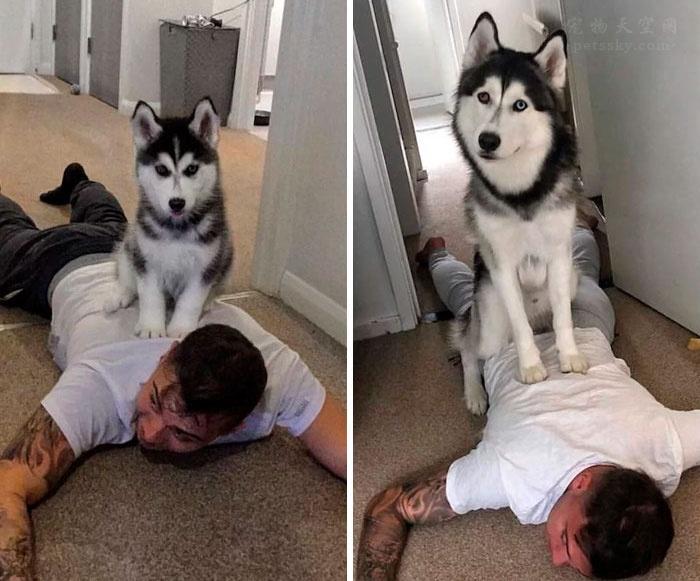 狗狗长大前的照片VS长大后的照片(14张)