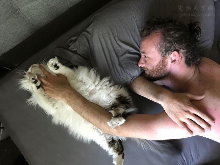 很多人说自己不喜欢猫咪,其实,他们都是骗子(19张)