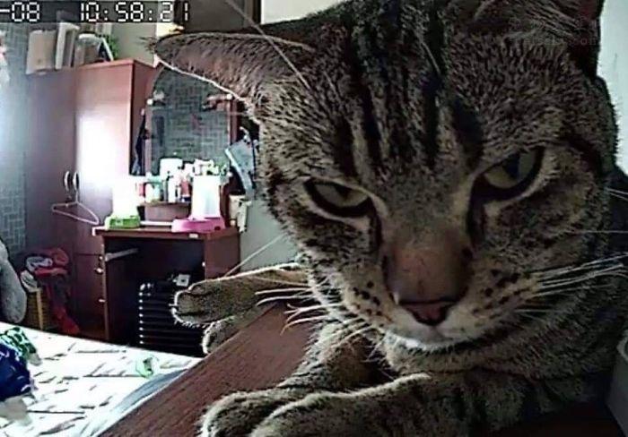泰国男子在睡觉前,打开摄像头,拍下猫咪对他的所作所为!