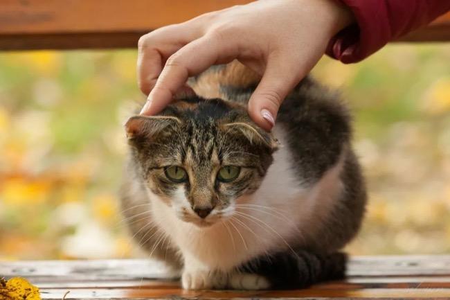 科学家证实:猫真能听懂自己的名字,只不过猫主子还是不想理你