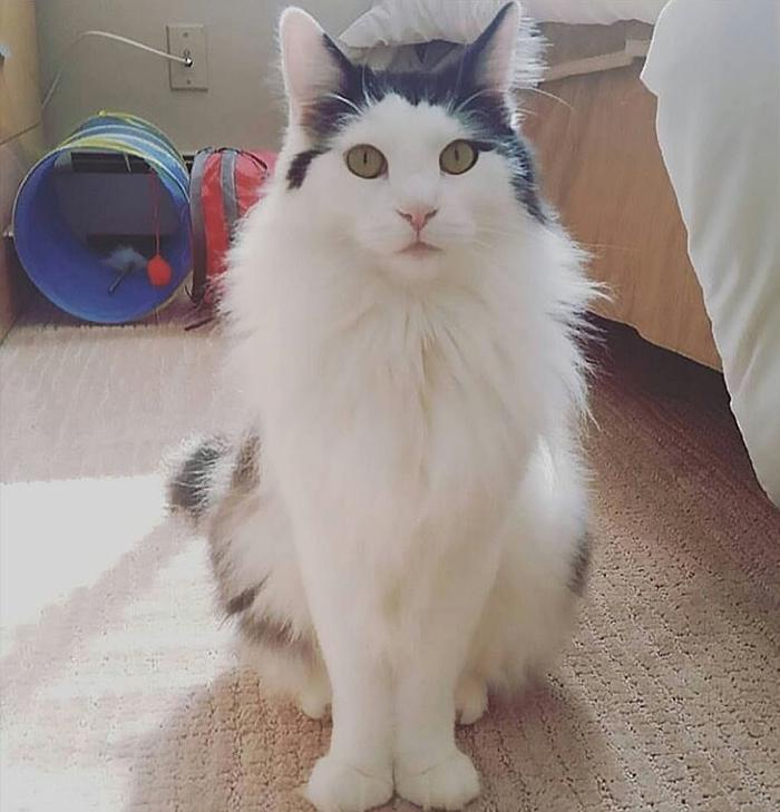 养猫咪的一些糟心事(16张)