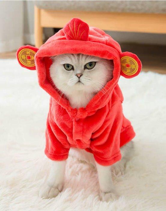 神经猫年货节来袭,让人疯狂打call的宠物用品优惠清单