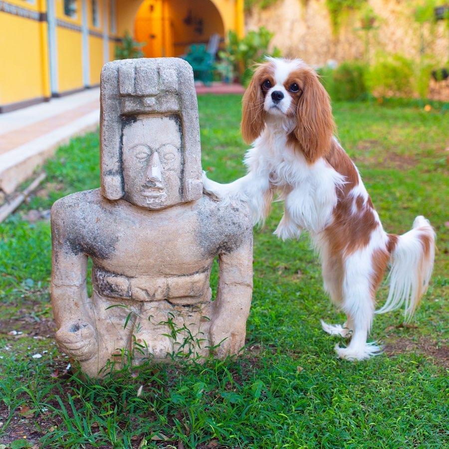 漂亮迷人的查理王小猎犬Pixel