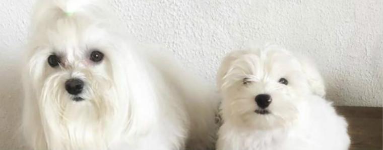这二十四种狗狗,你认识几种呢?(推荐)