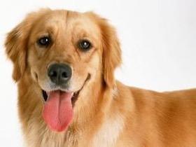 有没有某个瞬间,你突然觉得狗子越来越像个人?