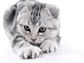 把宠物放在动物医院寄养 主人应该需要注意什么