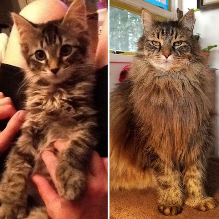 """岁月是一把无情的""""猫粮"""":曾经的小可爱,跑去哪里了?"""